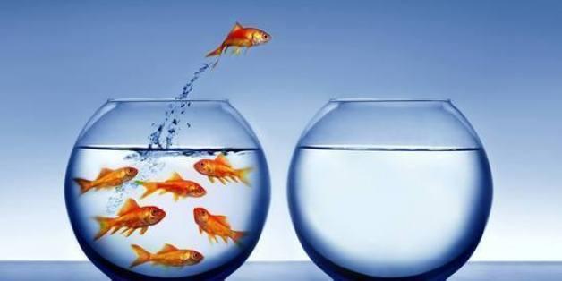 career_change_goldfish