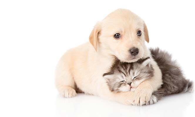 pet_immunization